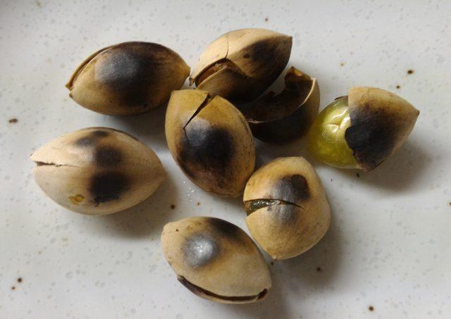 イチョウの実(銀杏)を採って食べる